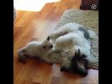 Котики и пёсики — друзья или враги?