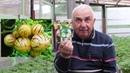 уДАЧНЫЙ совет Как вырастить помидоры перец и баклажаны и какие ошибки допускают дачники