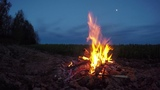 Relaxing Campfire Night Sounds with Crickets, Owls and a River near the Forest