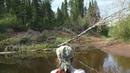 река Ветлуга на байдарке от д. Старица до устья Паозёра (Кировская область)