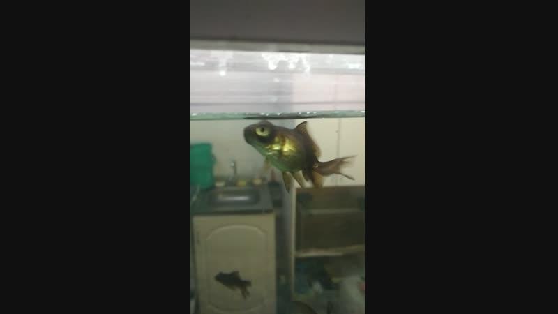 челябинские рыбы мутанты