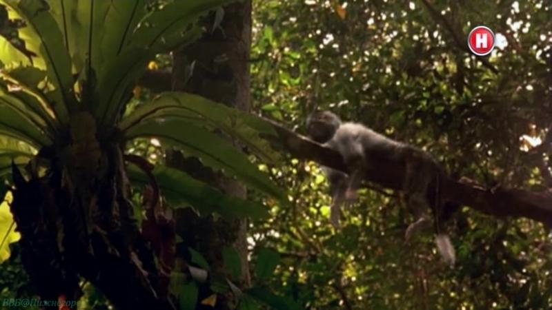 BBC «Мой домашний динозавр» (Познавательный, исследования, палеонтология, 2007)