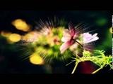 Wonderland by Night - engelbert humperdinck