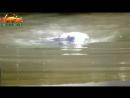 Милая коала прыгнула в воду и поплыла к туристам. Туристы были в шоке! _ Невероя
