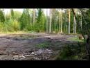 лесной