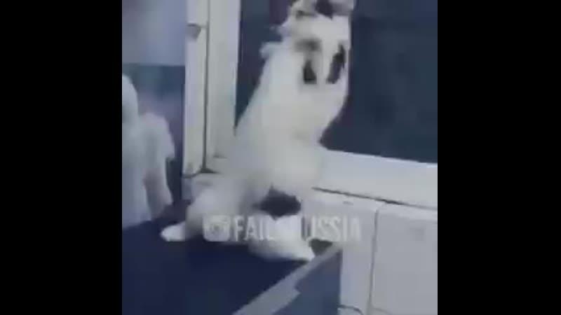 V я не танцую кот 1 mp4