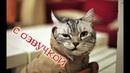 Приколы с котами – Смешная озвучка животных – ТОПовые приколы про котов 2018 с PSO