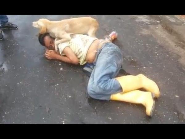 Un chien protège son maître, complètement ivre et couché au milieu de la route