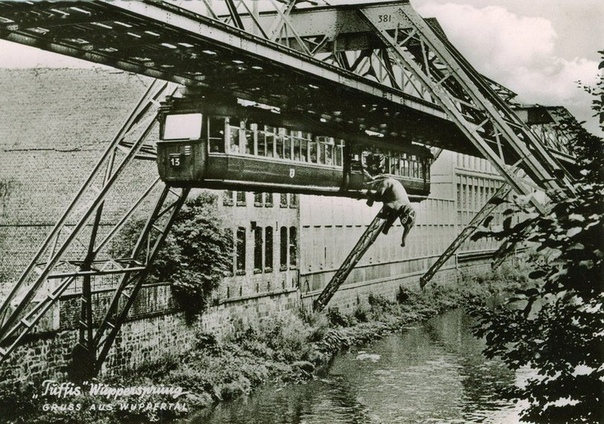 Побег слона из вагона монорельсовой дороги (Германия, 1950 г.)