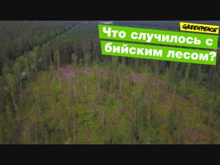 Что случилось с бийским лесом?