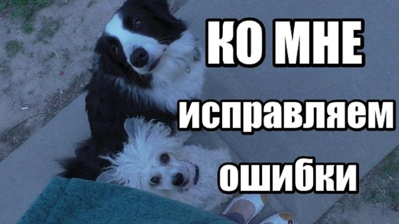 Почему собака не выполняет команду КО МНЕ 5 основных ошибок Дрессировка собак