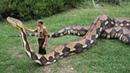 Видео анаконда, anaconda мутант! Не может быть! Самая большая змея! big snake, งู
