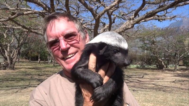 Moholoholo Rehab Centre South Africa Meet A Baby Honey Badger