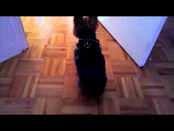 Купила светящийся ошейник для собак видео-обзор