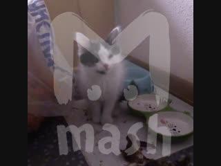 Задержали пьяного мужика, отбивавшегося от наряда котом