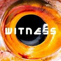 Логотип WITNESS