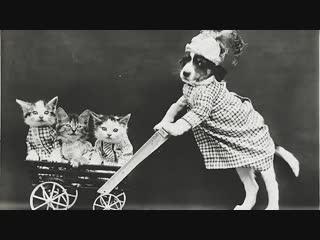 Старинные котики