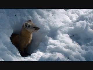 BBC: Охота / Прятки (Леса)