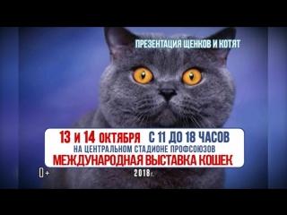 Выставка Кошек 13-14 октября 2018