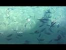 Рыбки на пирсе