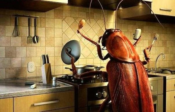 Анекдот про домашних вредителей *********************** Тараканы замучили, на кухне хозяйничают, проходу не дают! Попробуй мелок от тараканов. И что, помогает! Конечно! Видишь, сидят в углу и