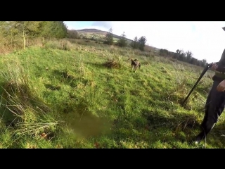 Hunting Woodcock, Pheasant  Rabbit Jan 2018 Ireland