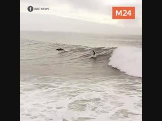 Мужчина и дельфины летят над океаном