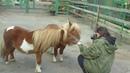 вот как это - фотографировать диких животных (мини-хорсов - Алеся, Майк и Вим))