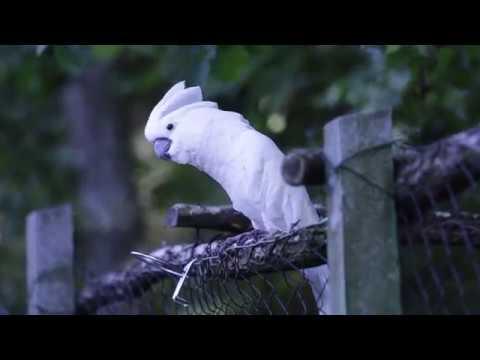 Разборки попугая и кота Гаси его, мочи его Вооооот так, воооот так Упс что то не так