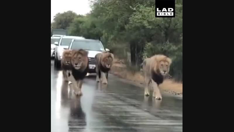 короли гуляют...королям дорогу