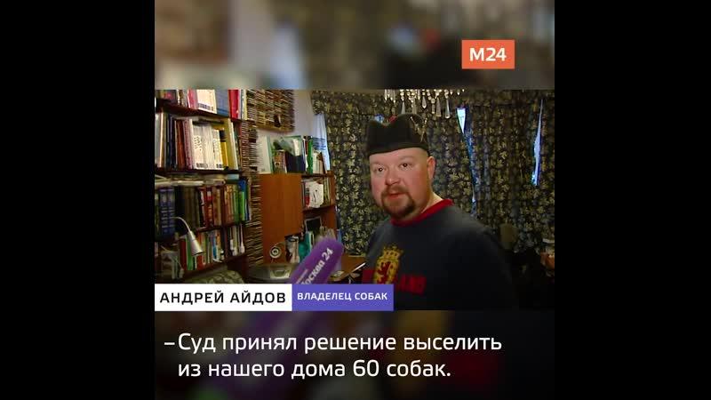 Приют для собак в квартире в Южном Бутово — Москва 24