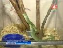 На двери сарая висела длинная зеленая змея! Как здесь оказалось рептилия