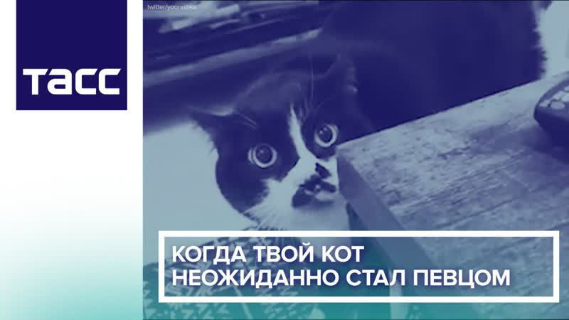 Когда твой кот неожиданно стал певцом