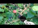 РАСТИТЕЛЬНЫЙ ВЕСТНИК СЕЗОН 3 ВЫПУСК 8 || PLANT REPORTER SEASON 3 EPISODE 8 ENGLISH SUBTITLES