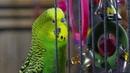 Питомцы дикие в душе 1 серия Pets Wild at Heart 2015
