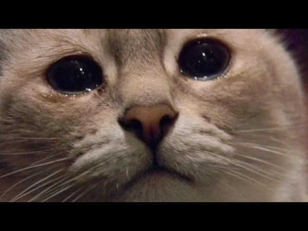 Кот смотрит видео со своим умершим хозяином
