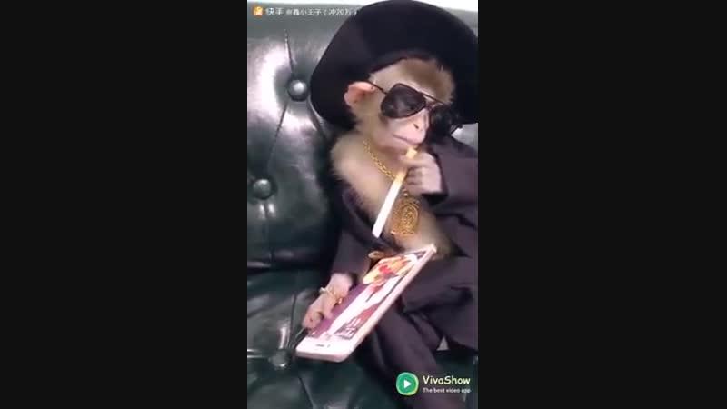 Крутой обезьян