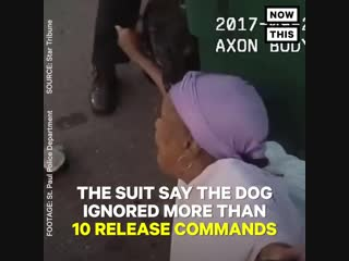Nowthis - police dog attacks black woman, k-9 officer suspended