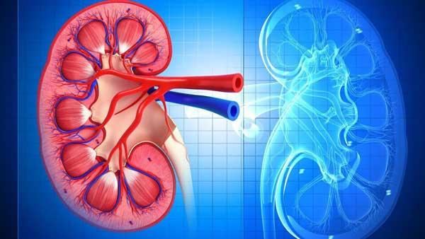 заболевание почек хронический пиелонефрит