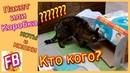 FB Коты и Кошки Челлендж ПАКЕТ либо КОРОБКА? Что выберут КОТЫ?