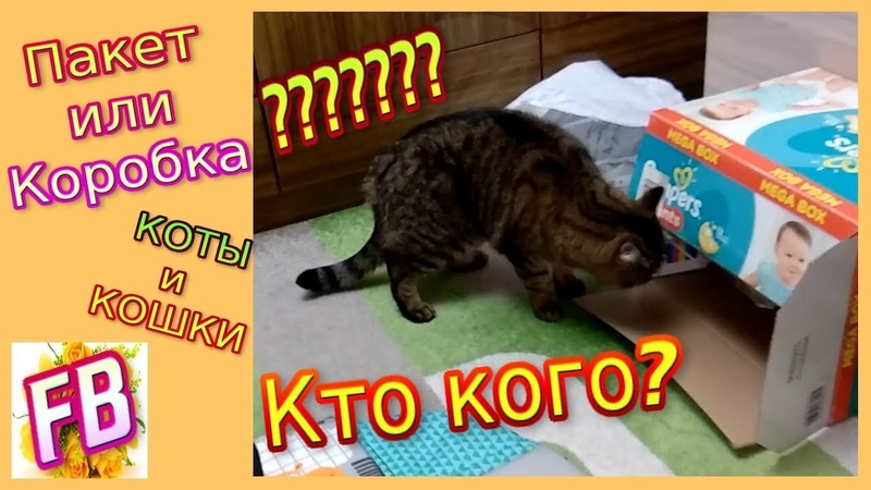 FB Коты и Кошки Челлендж ПАКЕТ либо КОРОБКА Что выберут КОТЫ