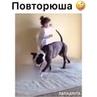 """🐾 Братья наши меньшие! 🐶🐱 on Instagram: """"Внимательно посмотрел как это делают и повторил! ☺️🙈 . 🎥: неизвестно . ✌️️Подписывайся: @lapadruga 🤗Отмеча..."""