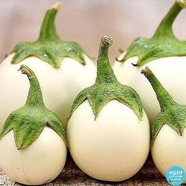 Это не яйцо на ветке, a ocoбый cоpт бaклaжанов, котоpый был выведeн в Индии. Как Вам