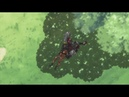 Naruto [AMV] - Inheriting the Master's Will
