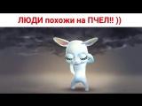 Некоторые ЛЮДИ похожи на ПЧЕЛ! )) Шутки от Зайки Zoobe.