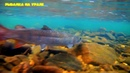 РЫБАЛКА НА ГОРНОЙ РЕКЕ/ХАРИУС,ТАЙМЕНЬ,съемка под водой. Рыбалка на Урале/FISHING ON the Ural