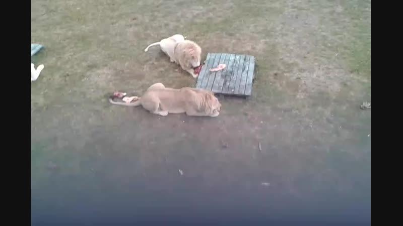 20181021_100207[1] парк львов ТАЙГАН