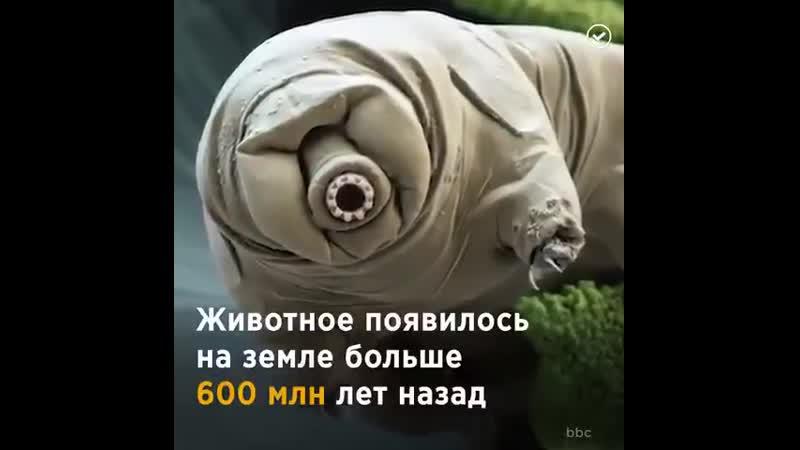 Тихоходки одни из самых выносливых существ на нашей планете.