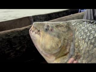 5 необычных рыб, пойманных и снятых на камеру - vk.com/brain.journal