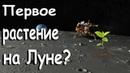 Космический аппарат Чанъэ-4 на обратной стороне Луны. Первое растение на луне.